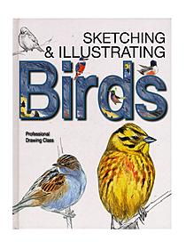 Sketching & Illustrating Birds each