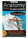 Anatomy Color-In Flash Cards