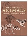 Art Anatomy of Animals