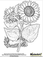 Download free coloring book pages