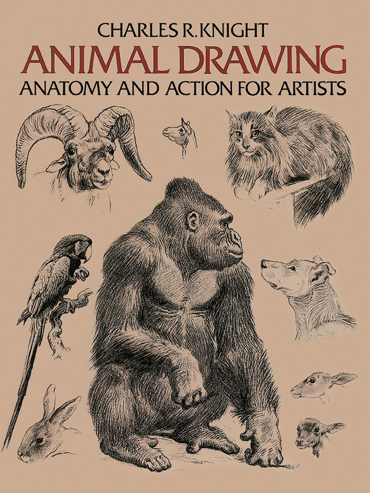Animal Drawing; Anatomy and Action for Artists | MisterArt.com