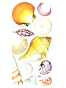Classic Stickers seashells 11 pieces